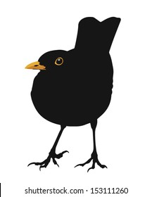 Illustration of the standing bird.