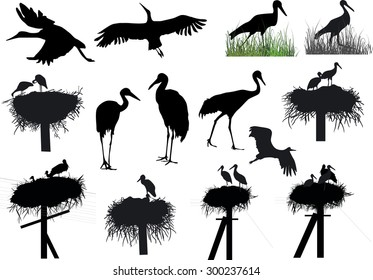 illustration with storks and cranes isolated on white background