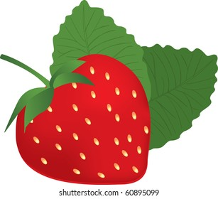 Illustration of the strawberry over white background