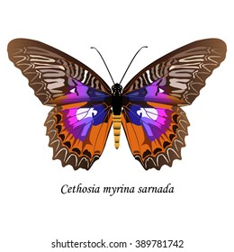 Illustration of Sulawesi butterfly of the Nymphalidae family -  Cethosia myrina sarnada. Element for design. ClipArt. The element of training patterns, biological descriptions, etc.
