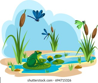 Illustration of a summer pond with a dragonfly and a frog