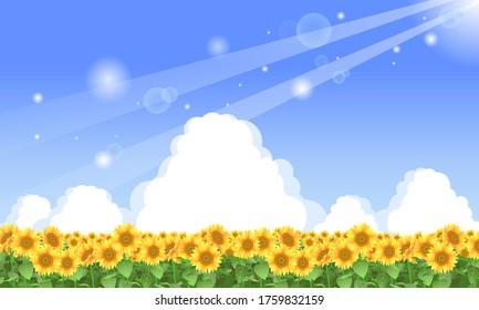 Illustration of a sunflower field in summer