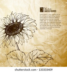 Illustration of sunflower. Vector illustration, contains transparencies, gradients and effects.