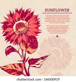 Illustration of sunflower. Vector illustration, contains transparencies, gradients and effects. Brushstroke Drawing. Pink vintage background with sunflower