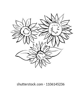 Illustration of sunflowers. Drawing in ink.