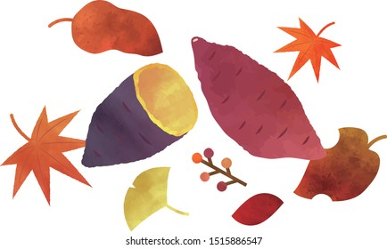It is an illustration of a Sweet potato.