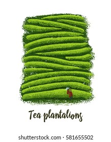 Illustration of tea plantations.