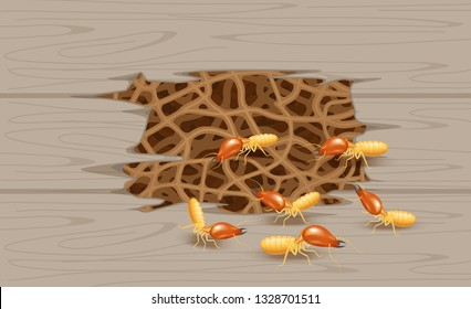 illustration termite nest at wooden wall, burrow nest termite and wood decay, texture wood with nest termite or white ant, background damaged white wooden eaten by termite or white ants