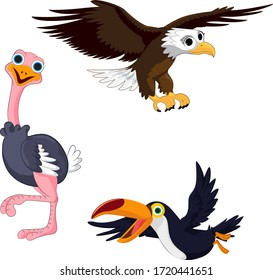 Illustration of three birds toucan, eagle and ostrich on a white background.