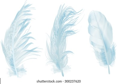 illustration with three blue feathers isolated on white background