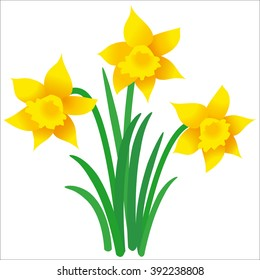 Illustration of three daffodils with leaves on white background; Vector graphic of Easter motif