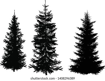 illustration with three fir silhouettes isolated on white background