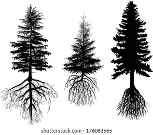 pine tree silhouette images  stock photos  u0026 vectors