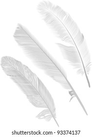 illustration with three gray feathers on white background