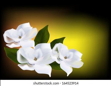 illustration with three magnolia flowers on dark background