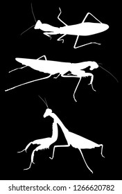 illustration with three mantids silhouettes isolated on white background