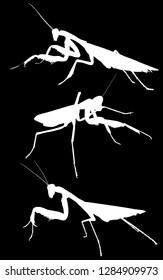 illustration with three mantids silhouettes isolated on black background