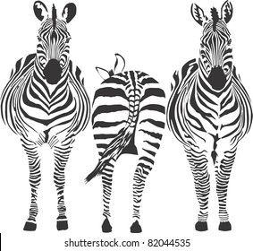 illustration of three zebras, two front, one rear