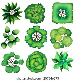 Illustration of the topview of leaves on a white background