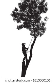 Illustration of a Tree Surgeon or Arborist roped up a tall tree