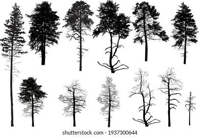 illustration with trees set isolated on white background