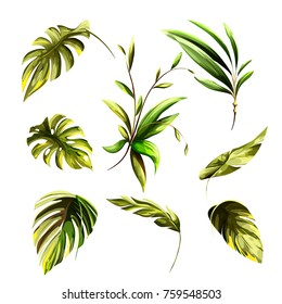 Illustration of tropical leaves. Isolated on white. Hand drawn, watercolor. Vector - stock.