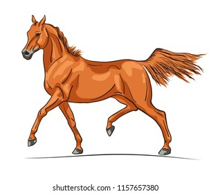 An illustration of a trotting arabian horse on the meadow.