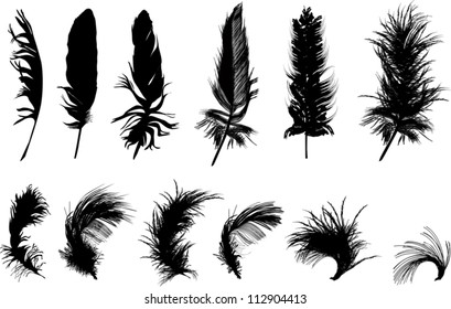 illustration with twelve black feathers isolated on white background
