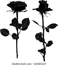 illustration with two black rose flowers isolated on white background
