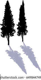 illustration with two cypresses isolated on white background
