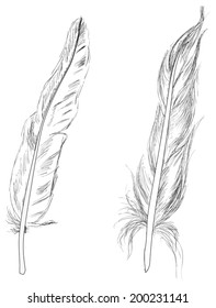 illustration with two feathers sketches isolated on white background