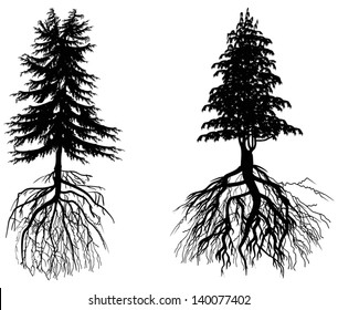 illustration with two firs isolated on white background