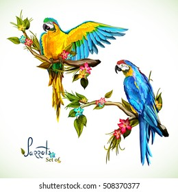 Illustration of two parrots on the tropical branches with leaves. Hand drawn, vector stock
