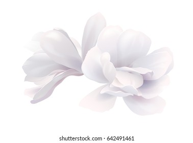 Illustration of two white beautiful Magnolias, Spring elegant flowers isolated on white background