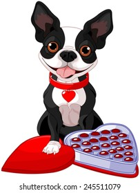Illustration of Valentine day Boston terrier