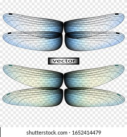 Illustration of vector drawing realistic wings of a dragonfly for a light background