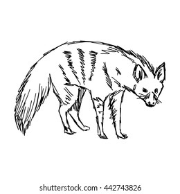 illustration vector hand drawn of aardwolf isolated on white background
