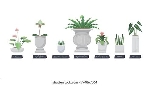 Urn Plant Images Stock Photos Vectors Shutterstock