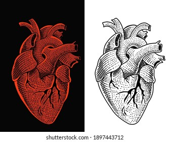 Illustration vector human heart with engraving style