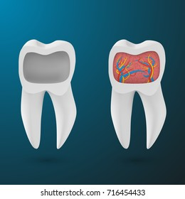 Illustration of Vector Realistic 3D Tooth Set. Healthy Teeth Set Care Vector Product Template