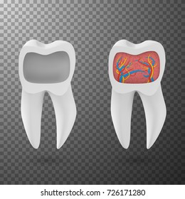 Illustration of Vector Realistic 3D Tooth Set. Healthy Teeth Set Care Vector Product Template Isolated on Transparent Background