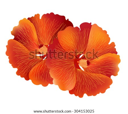 Illustration Vector Red Hibiscus Flower Common Stock Vector Royalty