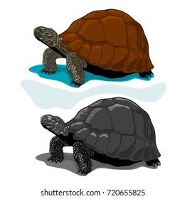Illustration of Vector Tortoises