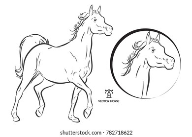 illustration walking horse - outline on white background plus horse head in circle for logo design and t-shirt