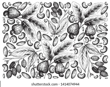 Illustration Wallpaper of Hand Drawn Sketch of Cashew and Canarium Indicum, Galip Nuts or Pacific Almonds Background.