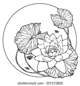 illustration of water lily, lotus, feng shui symbol