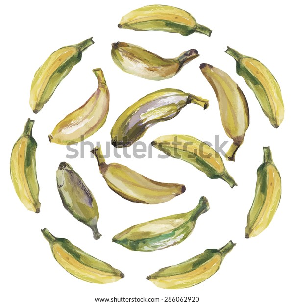 Illustration with watercolor bananas in vector format.