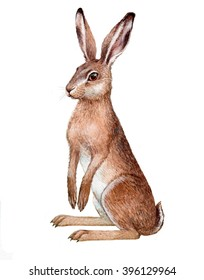 illustration with watercolor on paper. Isolated European hare