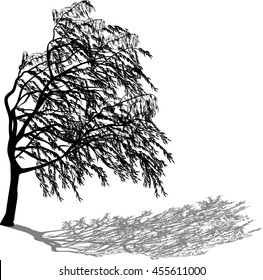 illustration with weeping willow isolated on white background