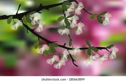 illustration with white cherry tree blossom